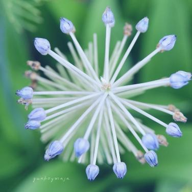 jardin botánico basilea1